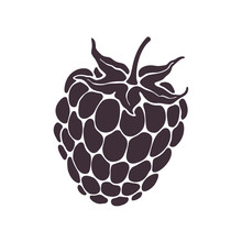 Vector Illustration. Silhouette Of Blackberry Or Raspberry Fruit With Stem. Healthy Diet And Vegetarian Food. Decoration For Packaging, Menus, Showcases. Isolated  Pattern On White Background