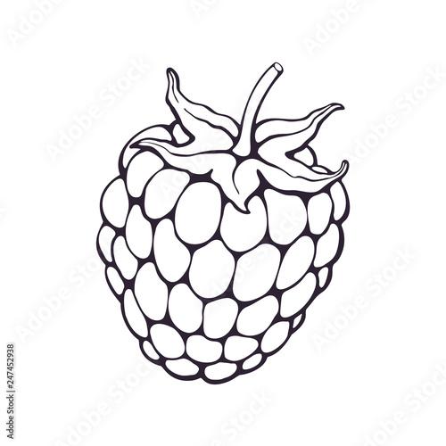Fotografia, Obraz  Vector illustration