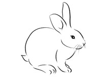 Beautiful Rabbit Illustration