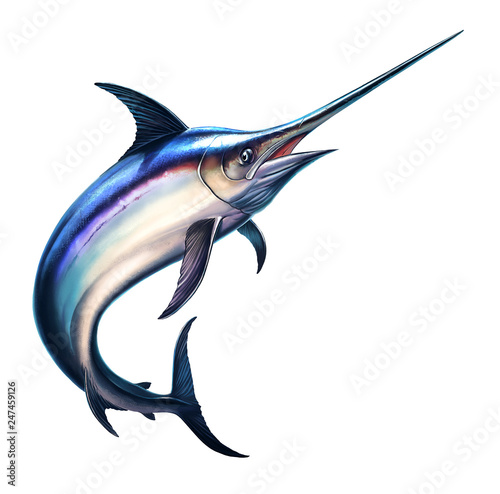 Fish sword on a white background Wallpaper Mural