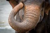 Słoń to wspaniały, ogromny ale wrażliwy zwierz
