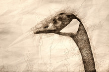 Sketch Of A Canada Goose Profile