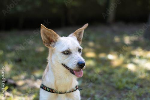 Foto  dog