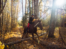 Jump On A Horse Over An Obstacle In The Autumn Yellow Forest. Classic Fox Hunt