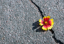 Crack On The Asphalt Road. A C...