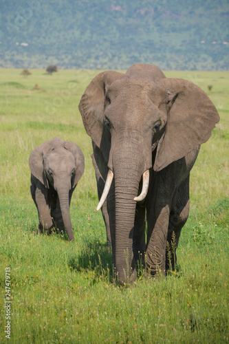 Photo  mother and baby elephant