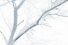 Abstract View Of Bare Tree Branches. Mystical Forest, Inverted Colors Effect