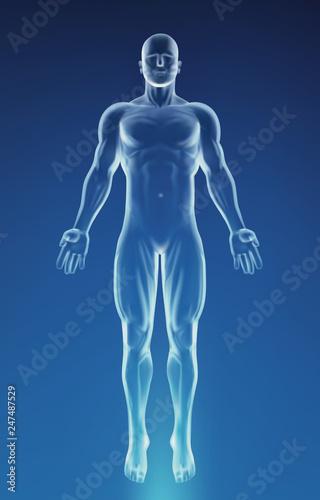 Fotografia Blue Human Anatomy Body