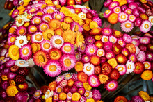 Varied  Color Of Strawflower Bouquet Decorated In Bamboo Branch