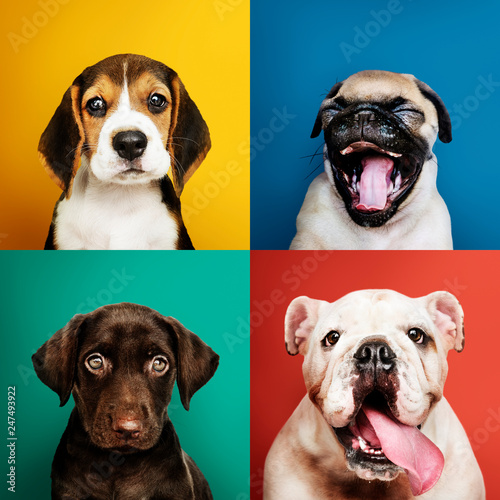 In de dag Pop Art Portrait collection of adorable puppies