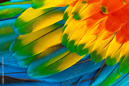 Photo sur Toile Perroquets Colorful macaw parrot feathers with red yellow orange blue for nature background