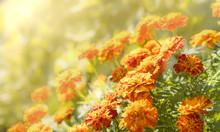 Autumn Tones Of Orange And Yel...