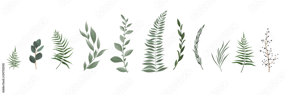 Fototapeta Vector designer elements set collection of greeng leaves herbs in watercolor style.