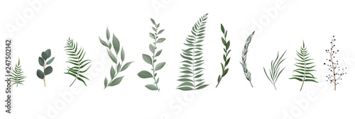 Fotografía  Vector designer elements set collection of greeng leaves herbs in watercolor style