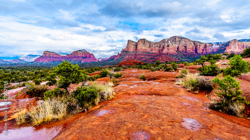 Fototapety, obrazy: Streams and Puddles on the Red Rocks the Munds Mountain after a heavy rainfall near the town of Sedona in northern Arizona in Coconino National Forest, USA