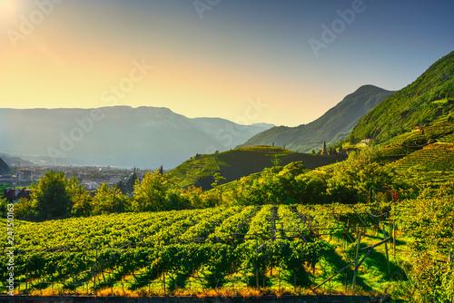 Fotografie, Obraz  Vineyards view in Santa Maddalena Bolzano