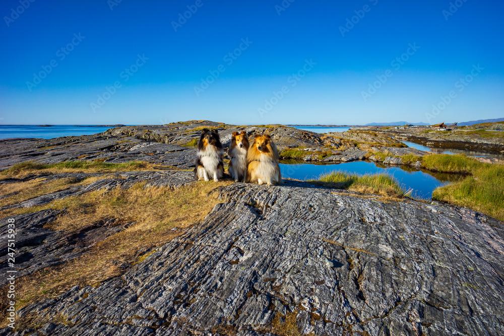 Fototapety, obrazy: Urlaub mit Hund in Norwegen