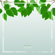 Background with fresh green leaves, vector background