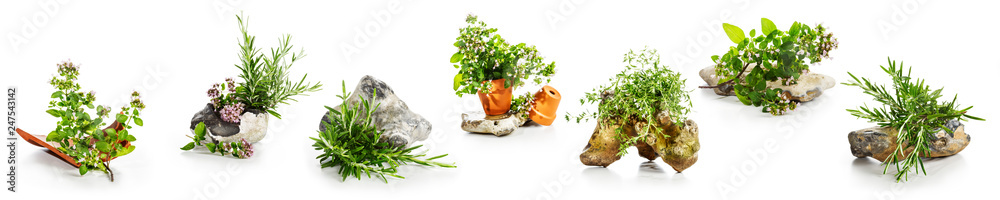Fototapety, obrazy: Marjoram, oregano, rosemary garden herbs set