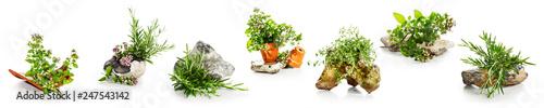 Marjoram, oregano, rosemary garden herbs set