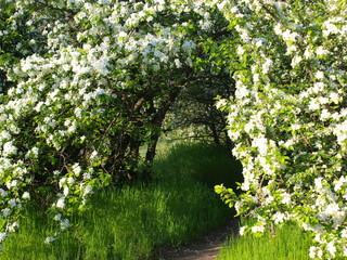 Fototapeta na wymiar spring beautiful flowers