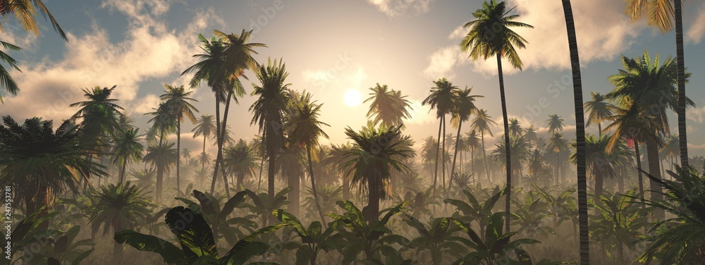 Fototapeta Morning in the jungle, Jungle in the fog, Panorama of the rainforest, palm trees in the fog, jungle in the haze,