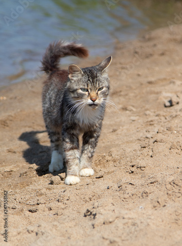 Photo  wild gray cat on the beach