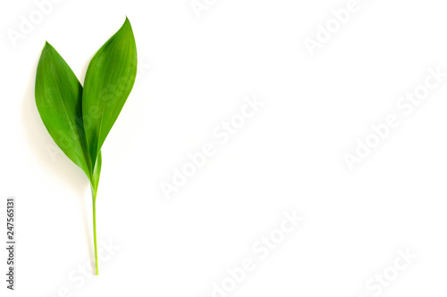 Poster Muguet de mai Green leaves of lilies of the valley
