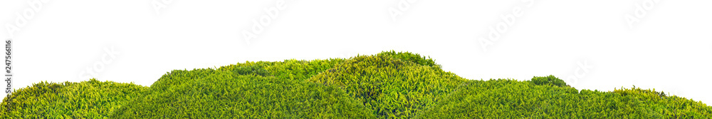 Fototapety, obrazy: isolated green moss stripe