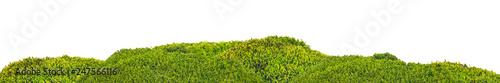 Fotografia isolated green moss stripe