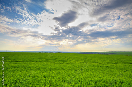 Fotomurales - rural landscape, green field grass with a blue sky and clouds