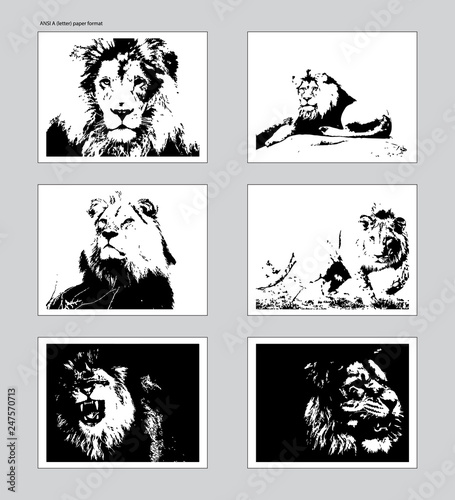 Fotografie, Obraz  Six vector posters with traced lion heads. Ansi A format mockup