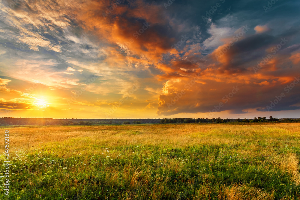 Fototapeta Sunset landscape with a plain wild grass field and a forest on background.