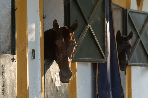 Fototapeta Cuadra de caballos de deporte obraz