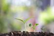 Growing green sapling tree plants
