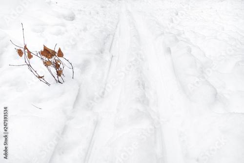 Fotografie, Obraz  twigs near ski track in snowfield in winter