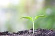 Growing green sapling plant