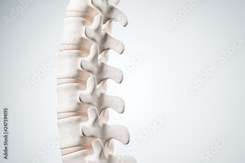 Photo Realistic human spine illustration