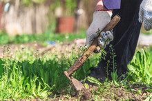 Old Man Uproots Hoe Weeds In H...