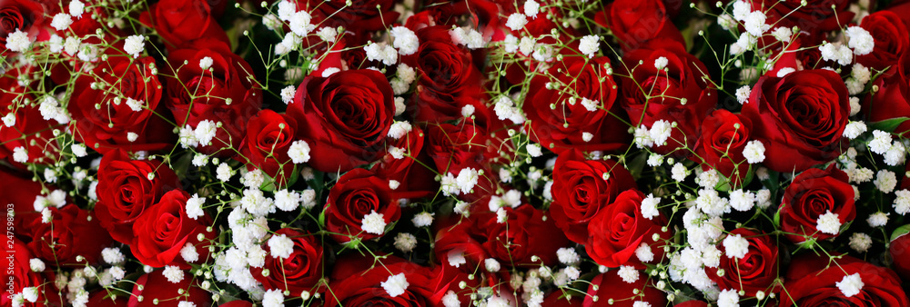 Fototapety, obrazy: Natural Dark Red Ruby Roses Background Wallpaper