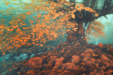 Fantasy Forest In Autumn With A Stream