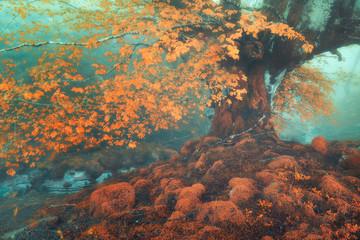 Fototapeta Jesień fantasy forest in autumn with a stream