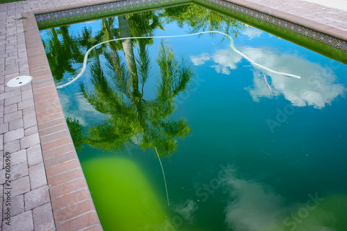 Back yard swimming pool behind modern single family home at pool opening with green stagnant algae filled water before cleaning Fototapeta
