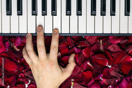 Fotografie, Obraz  Pianist hand on red rose flower petals playing romantic serenade on valentine's day loved one
