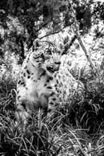 Endangered Species And Wildlif...