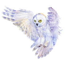 Watercolor Hand Drawn Owl On W...