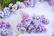 a branch of lilac on a gentle background