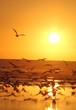 Birds at Sunset - Torrey Pines California