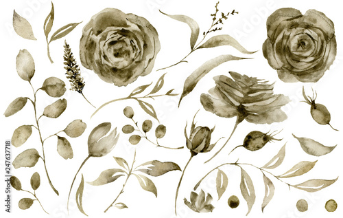 Watercolor sepia rose set Fototapet