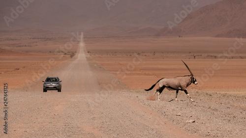 Photo Stands Antelope Oryx Antilope überquert Schotter-Straße mit ankommendem Mietwagen